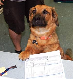 dog signing papers